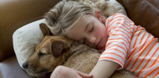 Un chien endormi dans les bras d'un enfant